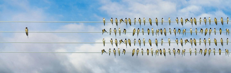 Birds sitting on a line